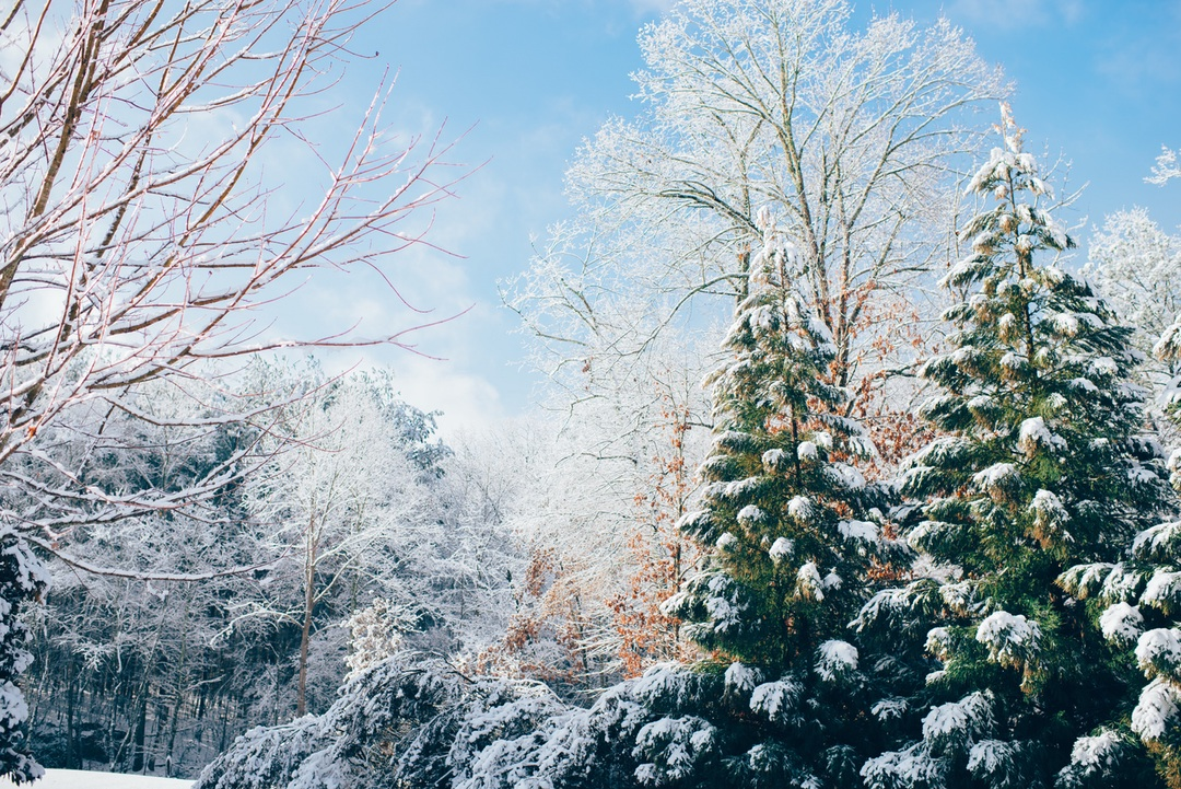 giving back for the holidays snowy pines image